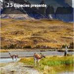 lateral_publicidad_1