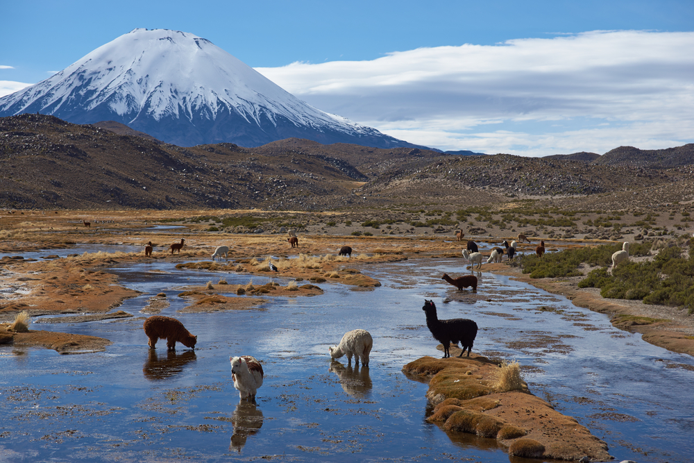 Image result for Parque Nacional Lauca fotos