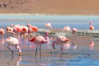 turismochile_flamencos_norte_chile