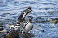 turismochile_monumento_los_pinguinos